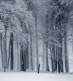 winter_forest_crop